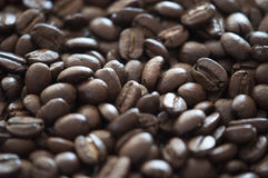 Koffiebonen Galore Royalty-vrije Stock Afbeeldingen