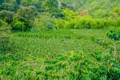 Koffielandbouwbedrijf in Manizales, Colombia Stock Fotografie