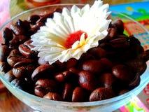 Koffiezaden met bloem stock afbeeldingen