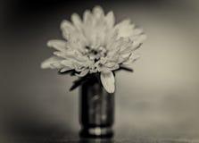 Kogel en bloem Stock Afbeeldingen