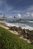 Koggala wrona i plaża Obrazy Royalty Free