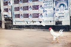 Kogut w Puducherry Fotografia Stock