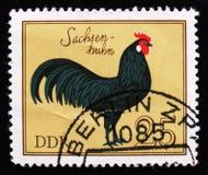 Koguta Saxony kogut od serii ` ptaków Domowego ` około 1979, Zdjęcie Stock