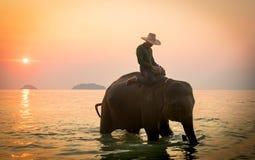 Koh Chang, Thailand 02-Feb-2018 Man att rida en elefant i havet under solnedgång arkivfoton