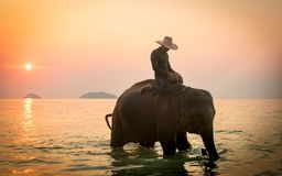 Koh Chang, Thailand. 02-Feb-2018. Man riding an elephant in the ocean during sunset. Man riding an elephant during sunset in the island of Koh Chang, south east stock photos