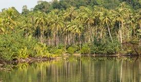 Koh Kood Island. Tropical coconut jungle on Koh Kood island in Thailand Royalty Free Stock Image