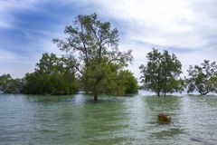 Koh Mook Island Mangroves royaltyfria foton
