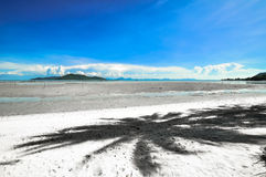 Koh Samui with coconut palm on panoramic tropical beach Royalty Free Stock Photo