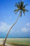 KOH Samui del coco Fotografía de archivo libre de regalías