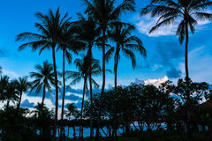 Koh Samui. Palm trees against a blue sky, Koh Samui royalty free stock photography
