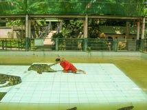 Koh Samui Tajlandia, Czerwiec, - 28, 2008: Krokodyla zapaśnika spełnianie przy przedstawieniem Fotografia Royalty Free