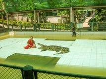 Koh Samui Tajlandia, Czerwiec, - 28, 2008: Krokodyla zapaśnika spełnianie przy przedstawieniem Obrazy Stock