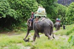 KOH SAMUI TAJLANDIA, PAŹDZIERNIK, - 23, 2013: Turyści iść na słoniach trekking Obraz Stock