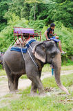 KOH SAMUI, THAÏLANDE - 23 OCTOBRE 2013 : Éléphant d'équitation avec le mahout de garçon sur la tête Image libre de droits