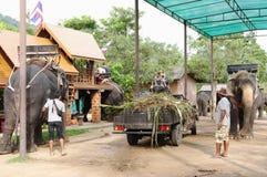 KOH SAMUI, THAÏLANDE - 23 OCTOBRE 2013 : Éléphants de ferme pour le trekking Images libres de droits