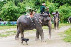 KOH SAMUI, THAÏLANDE - 23 OCTOBRE 2013 : Les Mahouts s'asseyent à califourchon sur sur des éléphants dans le harnais pour le trek Photographie stock libre de droits