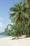 Koh Samui, Thailand, Asia Royalty Free Stock Photography