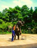 Koh Samui, Thailand - Juni 21, 2008: jonge olifant die trucs doen Royalty-vrije Stock Afbeeldingen