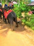 Koh Samui Thailand - Juni 21, 2008: Turister som rider elefanter Arkivbild