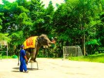 Koh Samui Thailand - Juni 21, 2008: ung elefant som gör trick Fotografering för Bildbyråer