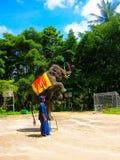 Koh Samui Thailand - Juni 21, 2008: ung elefant som gör trick Royaltyfria Bilder