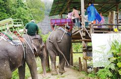 KOH SAMUI, THAILAND - OCTOBER 23, 2013: Elephants trekking, tourists landing on elephants. Royalty Free Stock Photo
