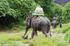 KOH SAMUI, THAILAND - OCTOBER 23, 2013: Tourists go on elephants trekking. Stock Image