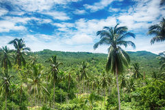 Koh Samui tropical forest. With palm trees royalty free stock photography