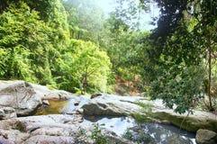 Koh Samui tropisk skog med bergsream Arkivfoto