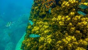 Koh Tao υποβρύχιο στοκ εικόνα