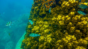 Koh Tao subacqueo Immagine Stock