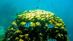 Koh Tao undervattens- liv Arkivfoto
