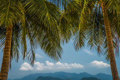 Koh Wai Palm Trees. Palm trees on Koh Wai island in Thailand Royalty Free Stock Photos