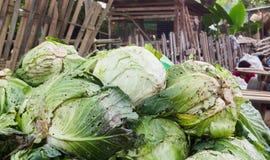 Kohl im Markt Gemüse im Markt Lizenzfreie Stockbilder