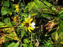Kohl-Schmetterling im Frühherbst Lizenzfreie Stockfotos