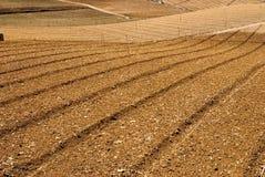 Kohlbauernhof nach Ernte Stockfoto