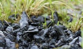 Kohle auf Gras lizenzfreie stockbilder