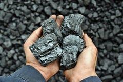 Kohle in den Händen des Arbeitskraftbergmannes stockfoto