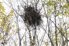 Kohlmeise-Vogel an den Nistkastentieren, die Frühling singen stockbilder