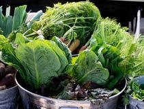 Kohlpflanzen und Karotten Lizenzfreie Stockfotografie