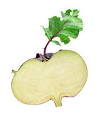 Kohlrabi cabbage Royalty Free Stock Image