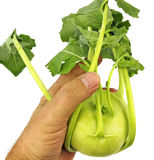 Kohlrabi in hand Royalty Free Stock Images