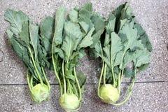 Kohlrabi, knol khol. Ganth gobhi, Brassica oleracea var gongylodes, vegetable crop with globose swollen stem base, stem and leaves used as vegetable stock images