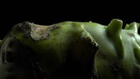 Kohlrabi root in rotation. Part of Kohlrabi root in rotation on a black background .Studio shot. Close Up. Macro stock video footage