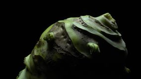 Kohlrabi root in rotation. Part of Kohlrabi root in rotation on a black background .Studio shot. Close Up. Macro stock footage