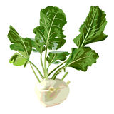 Kohlrabi. Royalty Free Stock Image