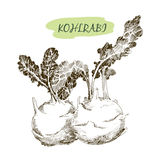 Kohlraby Royalty Free Stock Image
