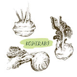 Kohlraby Stock Photography