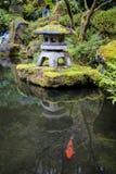 Koi在庭院池塘 免版税库存图片