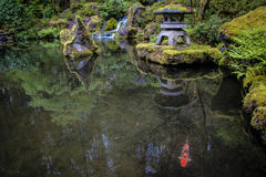 Koi在庭院池塘 免版税库存照片